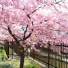 春色の贈り物