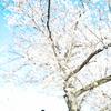 川越で花見&写真さんぽ