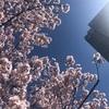 新宿で桜が開花しました☆