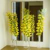 IKEAの試験管型ガラス花瓶でミモザ祭り@玄関