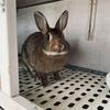 『ウサギドリル』でウサギの気持ちを勉強