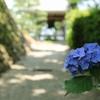 西国二十番札所「善峯寺」紫陽花