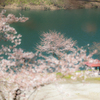 まだ3分咲きだった頃の千石ダムの桜