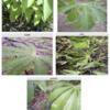 分析コンペ挑戦記: Cassava編