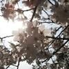 ガイアからのプレゼント🌸春🌱