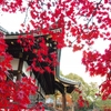 仁和寺  仁清と乾山 宮廷文化が生んだ きれいさび 京焼