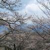 桜の名所・光城山(安曇野市)でお花見登山