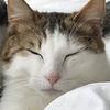 P10【保護猫日記】寝顔三連発