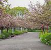春の於大公園