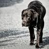 【チェックリスト】そのしぐさ、大丈夫? ~10のチェック項目でわかる、犬の老化のサイン~