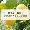 【レモン栽培】夏(6月~8月)にやることまとめ【柑橘類の育て方】