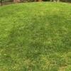 芝生の目土の注意点