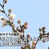 東京で17日午後に桜の開花が発表!満開は25日頃の予想なので、週末はお花見にGO!!