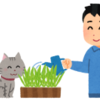 猫草の育て方って意外とカンタン!育てた新鮮な猫草を食べさせよう