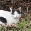 2月26日 荒川遊園から滝野川までの猫さま歩き とその情景
