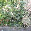 いろいろな 春の庭と、今日のオヤツと夕ごはん