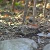 ここ数日まとめて。井の頭公園・秋川渓谷・善福寺公園・明治神宮・新宿御苑の野鳥。