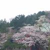 3月30日高幡不動尊
