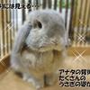 浅草でたくさんのウサギに囲まれる