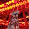 萱野神社 献燈祭