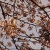 4月12日の日曜日 桜なのに自粛 今日つぶやいたことを寄せ集めてまとめてみました