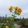 台風19号の爪痕が残る秦野市の「水無川周辺」と「戸川公園」