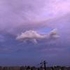 ピンクの空をクジラが泳ぐ