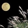 派遣OLの夜と名月!?なすところもなく日は暮れる・・・
