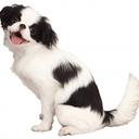 小型犬女子のビジネス実践帳U・x・U