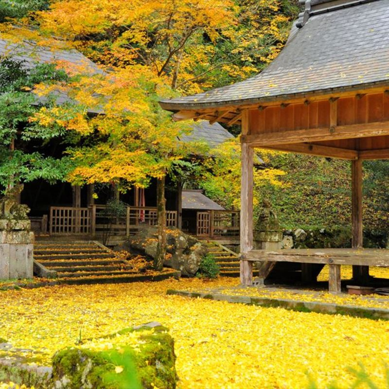 【2019】秋の京都・紅葉もいいけど銀杏(イチョウ)もね!厳選3選
