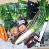 【ふるさと納税】鳥取県大山町と高知県奈半利町のお野菜