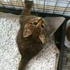 10月22日~26日|仔猫の回復。それは苦悩のはじまり ~活動の限界? 命の限界?(その5)~
