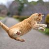 お知らせ 4/12(金)カラダ復活!!ワークショップ