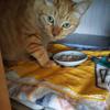 猫に必要な一日当たりの水分量知ってます? 〜足りていない子の多さよ・・・