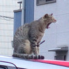 今日の景色  08/30 猫