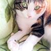 【愛猫日記】毎日アンヌさん#116