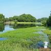 下小原池(鹿児島県鹿屋)