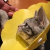 ニャン・ニャン・ニャン猫の日に、ジルの抜糸をしに病院に行く!