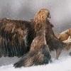 Eagles & Fox  Painting Art 風雪中の鷲と狐