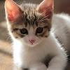 猫次郎と亀太郎。猫は平和を感じる。