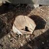 新しい薪割り台は、しいの木