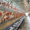 日和産業(2055)にみる国内畜産農家減少と業界再編の動き