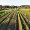 農園日誌ー秋、盛り
