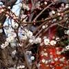 小さな春を見つけたよ! あけぼの山農業公園・日本庭園~布施弁天
