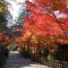 東山植物園の紅葉