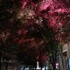 偽物の紅葉――東京国際フォーラム