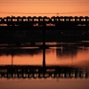 もうすぐ冬至、朝の大和川で南海電車を狙う