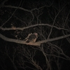 フクロウの森