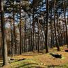 青木村の自然と特産品を楽しむ!森林浴イベントを定期開催