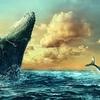クジラの口の中を体験したロブスター漁師さんはさぞかし怖かったはず